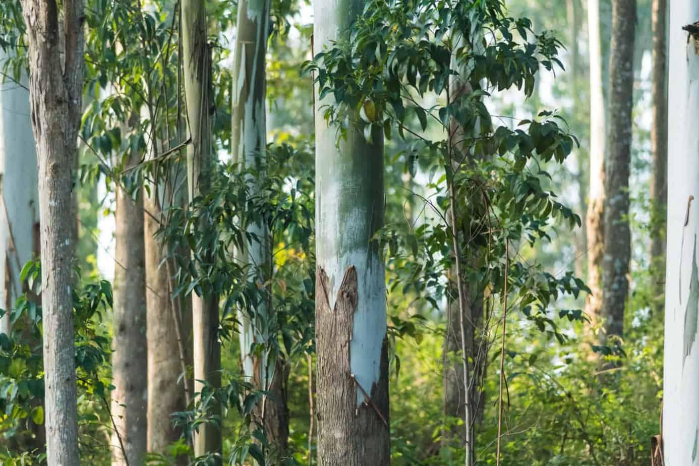 Lyocellkissen Lyocelldecke aus Eukalyptusbaum